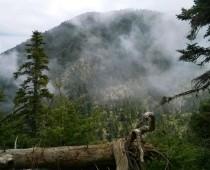 Οίτη – Τοπίο στην ομίχλη 10.04.2016