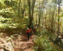 Δάσος Φρακτού 26.10.2019